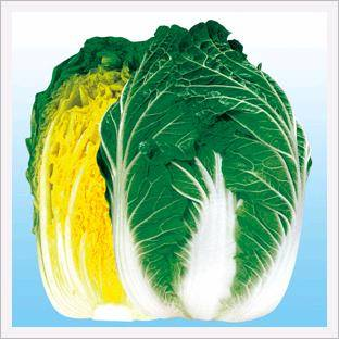 Chinese Cabbage, Champion Norang